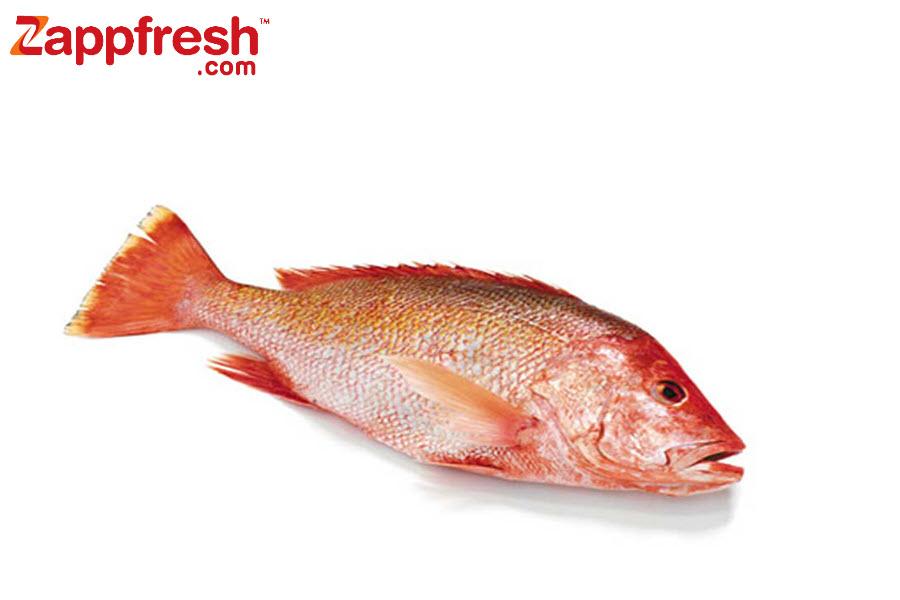 Zappfresh Food Tips - Fish